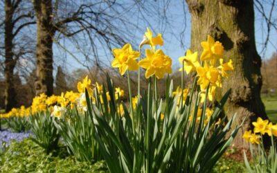 The Joy of Spring Living